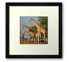 Elegant giants Framed Print