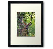 Waterbuck Framed Print