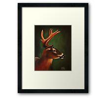 Whitetail Buck Deer Framed Print