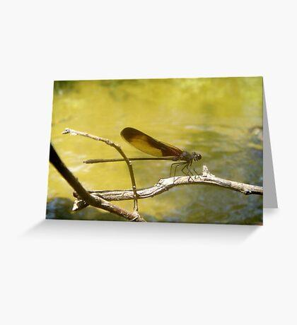 AMERICAN RUBYSPOT on Econfina Creek Greeting Card