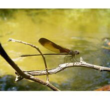 AMERICAN RUBYSPOT on Econfina Creek Photographic Print