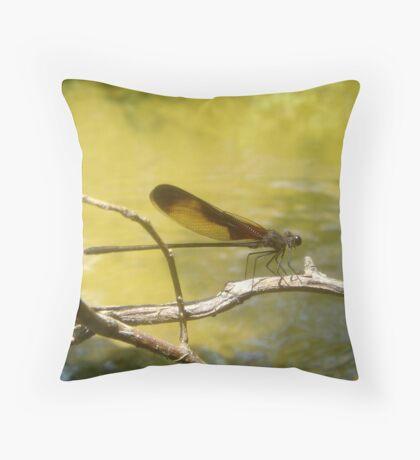 AMERICAN RUBYSPOT on Econfina Creek Throw Pillow