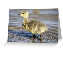 Can someone pass the towel? Greeting Card