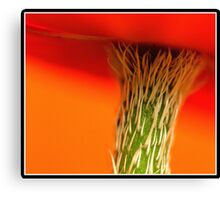 Almost to the top.............. Canvas Print