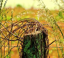 Country Road Fence Post by Stacy Brooks Photography