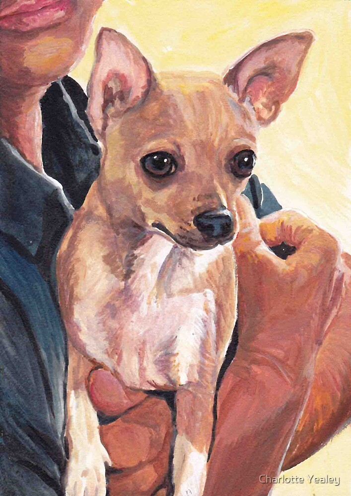 Ramone-the chihuahua by Charlotte Yealey