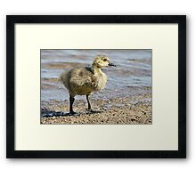 Saturated Framed Print