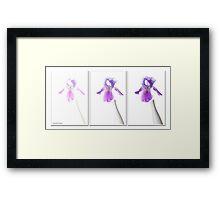 Iris Triptyque Framed Print