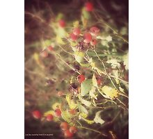 LAURA SHAFER PHOTOGRAPHY #125 Photographic Print