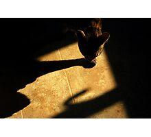 Shadow Stalker Photographic Print