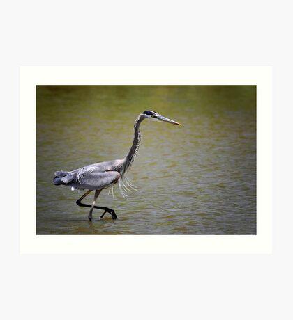 Blue Heron on the Hunt Art Print