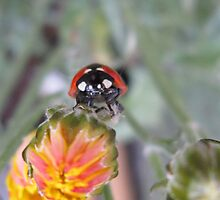 LADYBIRD2 by rodney arbuckle