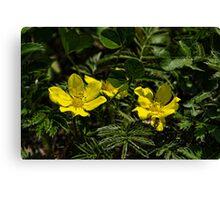 Wild flower 4 Canvas Print