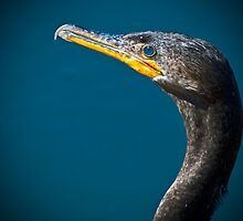 Cormorant up Close by George I. Davidson