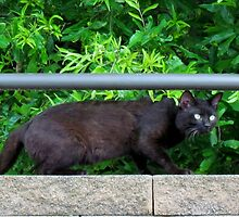 Sneaking Black Cat by Cynthia48