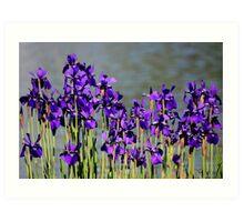 Waterside Iris's Art Print