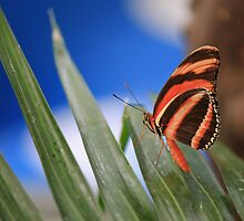 Beautiful Butterfly by Michael L. Colwell