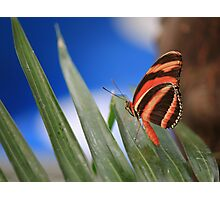 Beautiful Butterfly Photographic Print