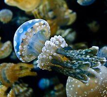 Mushroom Jellyfish III by Diego  Re