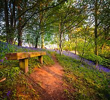 A Seat in The Bluebell Wood by hebrideslight