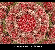 Rose of Sharon by Missy Gainer