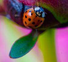 Lady Bug and Peony by Mickaela