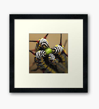 Caterpillars Framed Print