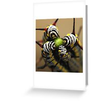Caterpillars Greeting Card