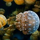 Jellyfish Swimming Right by Diego  Re