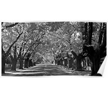 Colourless Autumn Poster