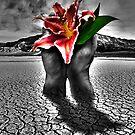 Desert Bloom by ☼Laughing Bones☾