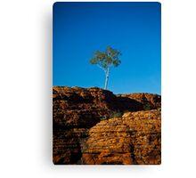 One tree Rock Canvas Print