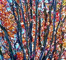 Late Autumn Color 1 by kahoutek24