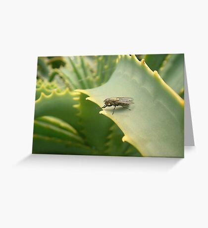 Aloe Leaf Greeting Card