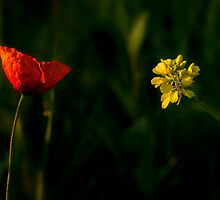 Red or Yellow? by THHoang