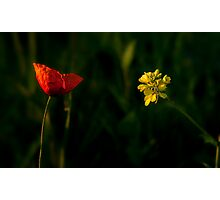 Red or Yellow? Photographic Print