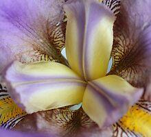 Iris II by phildesjardins