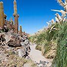 Rio Vilama, San Pedro de Atacama, Chile by parischris