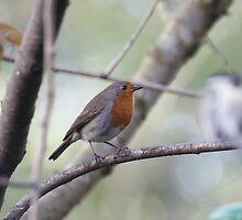 Robin by LeightonM1