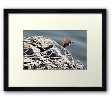 SPARROW  . Framed Print