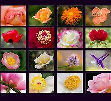 A Day in the garden - Purple Background by Jerry Deutsch