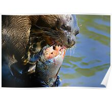 Giant River-otter eating a fish 002 Poster