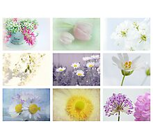 Collage of spring Photographic Print