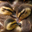 Huddled Ducklings by David Kocherhans
