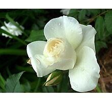 White bud Photographic Print