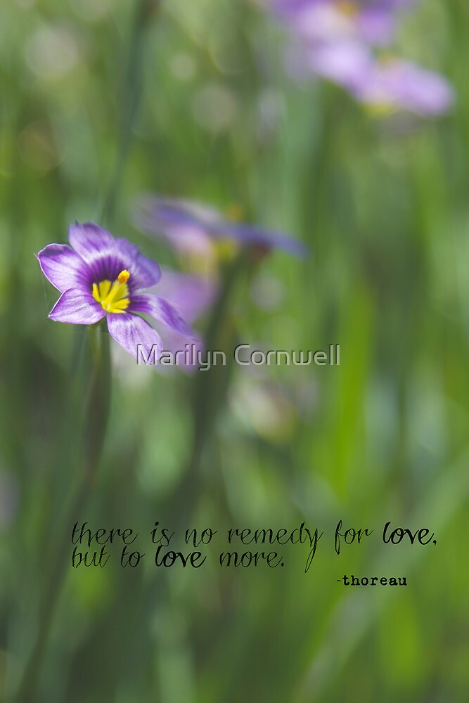 No Remedy for Love by Marilyn Cornwell