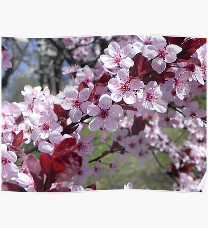 PINK TREE BLOSSOMS  Poster