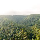New River Gorge by cyasick