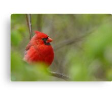 Quiet Cardinal Canvas Print