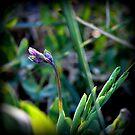 wild flowers 2 by karolina